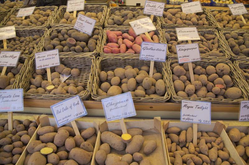 Incredible variety of potatoes
